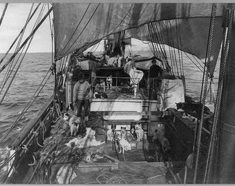 Dogs on Deck, British Antarctic Expedition, 1910, Early 1900's Photo Print