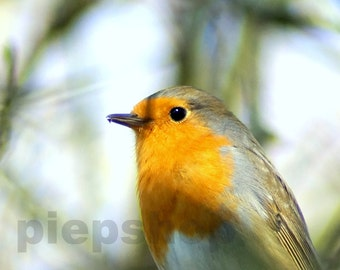 Robins Robin Photography 10 x 15 cm