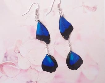 earrings butterfly wings blue