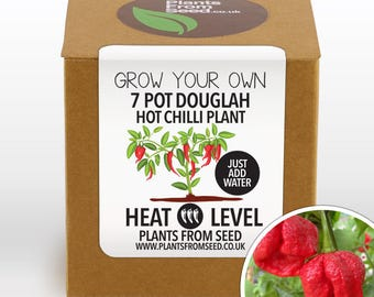 Grow Your Own 7 Pot Douglah Chilli Plant Kit