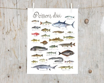 Print Fishes of Québec   Watercolor fish painting   Art mural Nature Print   Poster identification classification Fish   Gift