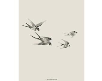 Print Of Swallows