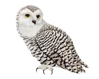 Snowy owl clipart | Etsy