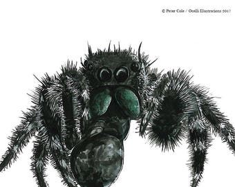 Bold Jumping Spider art print, original bug artwork, insect illustration