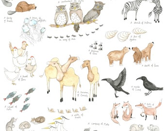 Animal Collective Nouns, Collections of animals, groups of animals , illustration, water colour, print