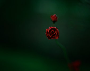 Roses Are Red,Wall Art,Art Deco,Nature Print,Room Decor,Nature,Art,Print,Flower Print,Rose,Red,Green,Flower