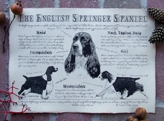 Antique styled dog standard - English Springer Spaniel