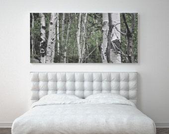 Aspen Trees, Nature Photography, Printable Art, Colorado, Late Summer