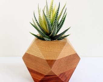 Mix & Match Edition - Geometric Wood Planter (Oak / Cherry / Rosewood)
