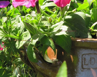 Digital photo, digital art, Garden photo, Garden flowers, instant download, for Mom, nature photo, kitchen decoration
