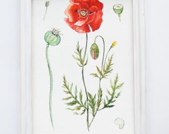 Poppy painting| Original watercolor painting| Botanical illustration| Flower painting| Watercolor flower painting| Small painting| POPPY
