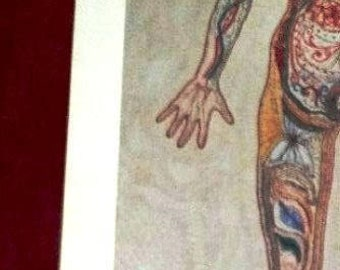 "Embroidery ""Sampler"" 1981 Lithograph from Quimetta Perle Embroidery of Woman's Anatomy Tall Narrow 16""x32"""