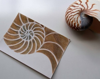 Nautilus Shell Drawing, Original coloured pencil drawing, Chambered Nautilus shell, Sea shell art, Ocean art, Beach house decor, Art Sale