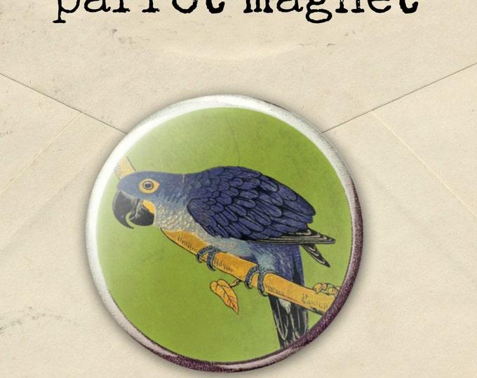 Parrot fridge Magnet, bird lover magnet, bird office decor, gift for parrot lover, vintage parrot illustration - parrot prize - bird prize