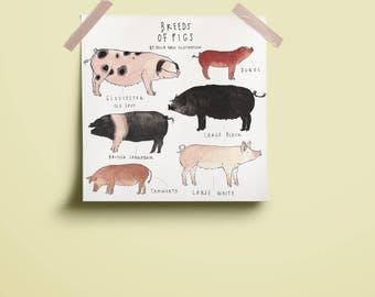 Breeds of Pigs Print