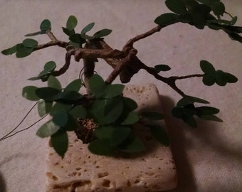 Acorn Cap Bonsai Tree - Summer