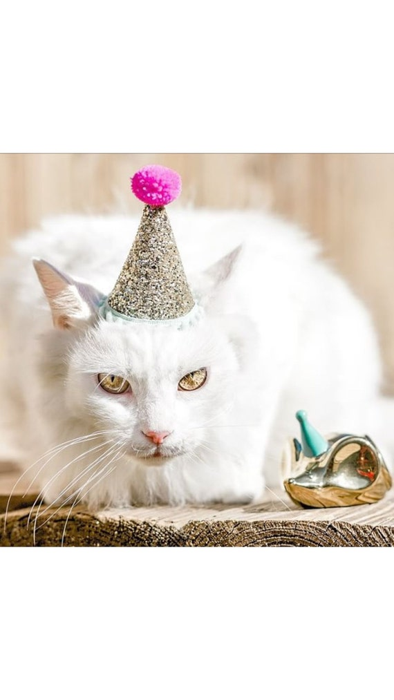 Hats for Cats Cat Party Hat Cat Birthday Hat Animal