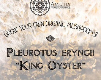 Organic King Oyster Sawdust Spawn (Pleurotus eryngii) LIVE MYCELIUM - 50g *PDF Book Included