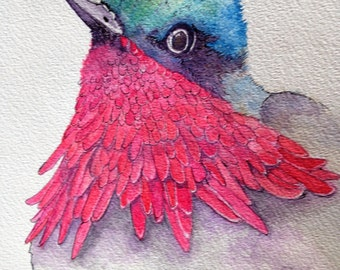 Pinkish/Red chested Bird head