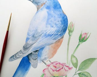 Watercolor Illustration Original Bird on Rose Original Birds Illustration Eastern Bluebird