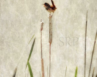 Live Out Loud - INSTANT DOWNLOAD - Marsh Wren on Cattail