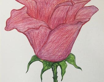 Pink, Red and Purple, Rose colored pencil drawing, Art Print