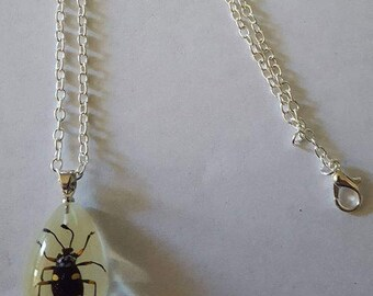 Beetle, Beetle necklace, Insect, Insect necklace, Oddity, real insect, Beetle jewelry, Insect Jewelry, msFormaldehyde