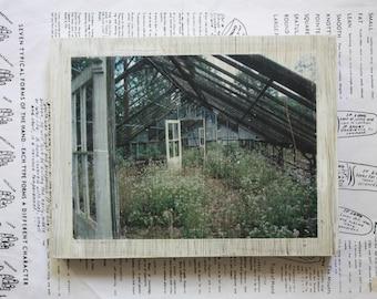Greenhouse, Garden, Doors, Wild Flowers, Photography, Original Art, Miniature, 6 x 7 1/2