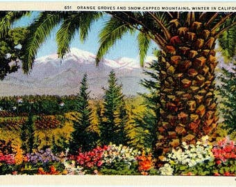 Vintage California Postcard - Orange Groves and Snow-Capped Mountains in Winter (Unused)