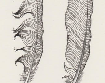 Original ink feather drawing ~ two messy feathers