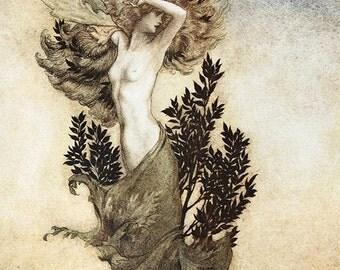 Daphne,  Arthur Rackham, Vinatge Art Print