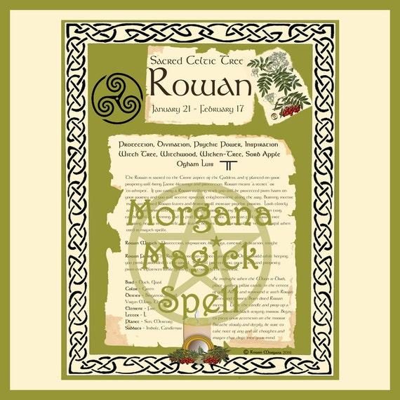 Rowan Sacred Celtic Tree