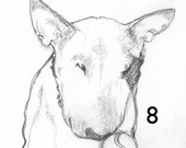 Tennis Ball Bull Terrier Line Drawing - Print to frame + matted options