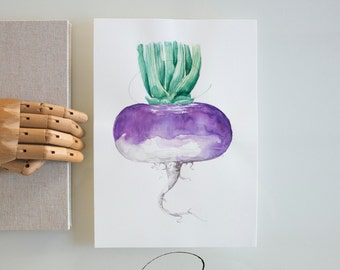 Turnip art, original drawing, modern art, kitchen wall art illustration, food art, vegetable illustration, art drawings,  turnip watercolor