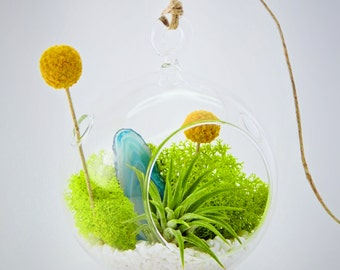 Air Plant Terrarium Kit with Moss, Flowers, Rocks and Agate Slice / Surf's Up