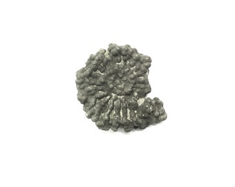 Fossil ammonite pyrite fools gold collector museum collectible iron diagenesis altered palaeontology paleontology