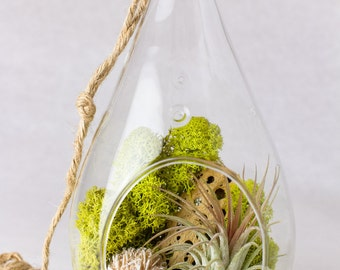 Hanging Teardrop Terrarium || Desert Rose + Pyrite Air Plant Terrarium Kit || Neutral Decor || Natural Modern || Gifts for Her || Boho