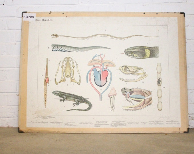 Large Anatomical Chart Of The Reptiles Circa 1930's