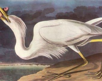 "John James Audubon's Watercolor Artwork ""Great White Heron"" Vintage 1937 Birds of America Book Print"