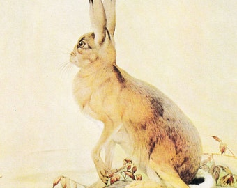 hare print illustration Fables of Aesop hare and tortoise Julius Detmold 1909 victorian vintage