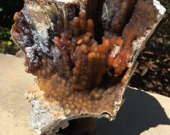 Fossilized Coral Stalactite/Stalagmite Geode 3-18-4-17