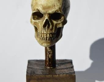 Human Skull, 1/4 scale