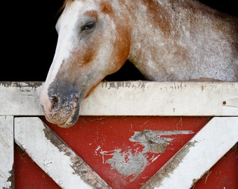 Horse Photography Smiling Horse Print Rustic Nature Photography Red and White Farmhouse Decor Wall Art Equine Photo, Equine Art