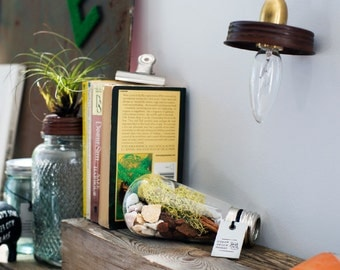 DIY Wide Glass Bulb Terrarium Kit with Air Plant