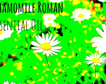 Roman Chamomile Oil | Pure Essential Oils | Aromatherapy Oil | Sleep Aid | Insomnia