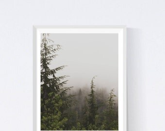 Forest printable, foggy forest, forest, fog, photography nature, forest art prints, printable art trees, nature printable, wilderness