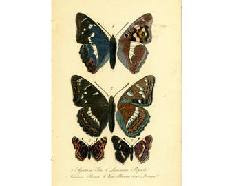 1879 Antique Emperor Lithograph Butterfly Illustration Tortoisehell. Insect. Entomology. Natural History.
