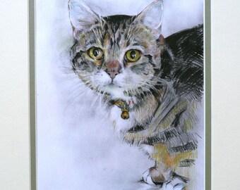 Cat Drawing - Tabby (Munchkin)