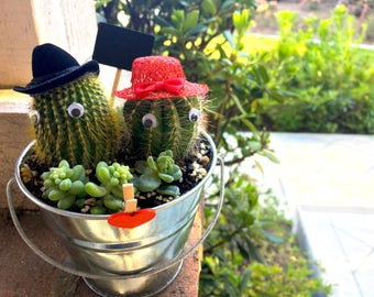 Cute Couples Cactus with Tiny Hats and Googly Eyes in Planter + Succulents