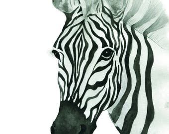 Limited Edition Zebra Watercolour Print